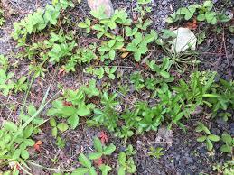 herbalism the druid u0027s garden
