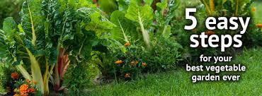 fabulous best soil for raised vegetable garden best soil for