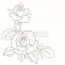 design flower rose drawing flower hand drawing at getdrawings com free for personal use