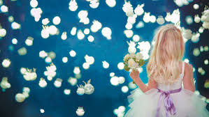 wedding backdrop vancouver vancouver aquarium weddings