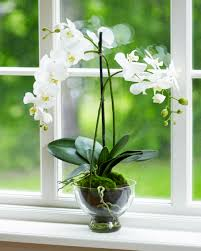 8 indoor plants you can u0027t kill third plants and indoor
