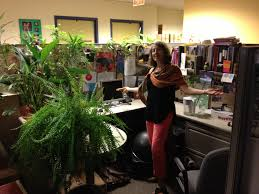 Office Desk Plants by Funny Fill Cubicle With Office Plants Prank Best Plants For
