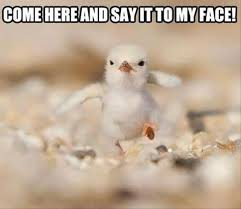 Too Cute Meme Face - too cute rtr 16 ragtag riot