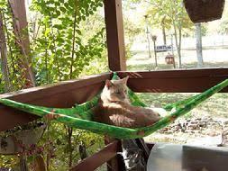 comfy cat habitat