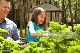 In Backyard Father And Daughter Enjoy Gardening In Backyard Homegrown Organic
