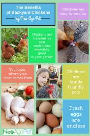 the benefits of backyard chickens infographic new age pet