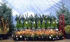 liveed trees for sale mini deliveredlive