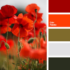 red poppies color sanguine and scarlet underlined with khaki