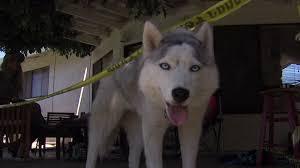 Dog Burial Backyard Dog Finds Human Skull In Backyard Puppy Leaks