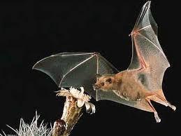 mammiferi volanti adnkronos
