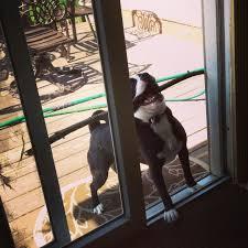 funny door stops well i don u0027t know why i u0027m not inside but i u0027m having fun and