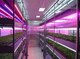 hydroponic led grow lights lettuce growing with smd 5050 flexible led hydroponic grow light