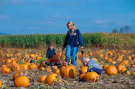 Best Pumpkin Patch Albany Ny by Oregon Wine Country Willamette Valley Wine Wineries U0026 Tasting Rooms