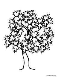 maple tree coloring pages kids free printable maple tree