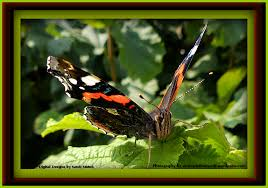 butterflies from the