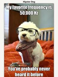 Hipster Dog Meme - hipster dog just a small town girl 52625b 3642197 jpg