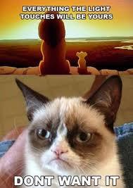 Rich Cat Meme - grumpy cat is new animal meme sensation cute animals pinterest