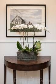 biggest house plants 14 best indoor plants classic design images on pinterest indoor