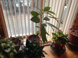 moved my indoor plants inside for the winter zone 5b album on