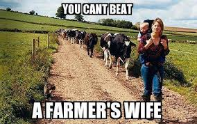 Farming Memes - beat as in out do cow cow ranch