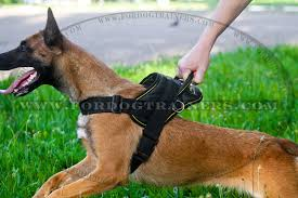 belgian shepherd uses all weather dog harness for tracking pulling designed to fit