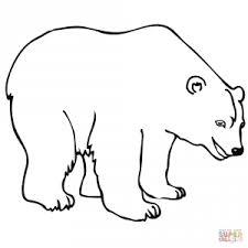 polar bear 20 coloring animal simple polar bears coloring