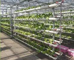 pvc pipe plant vegetable nft hydroponic system buy nft