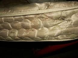 Bed Bugs On Mattress Signs Of Bed Bugs Pictures Of Bed Bug Infestations