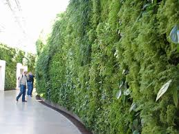 indoor green wall with innovative lots of different plant ideas