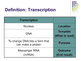 transcription u0026 translation ppt video online download