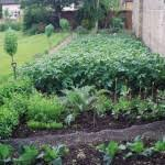 backyard vegetable gardens decorating clear