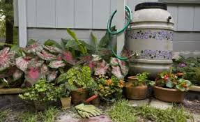 uf ifas extension florida friendly landscaping program rain barrels