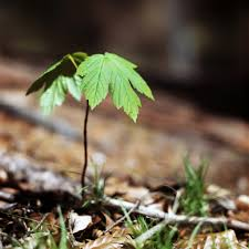 tiny tree mathias erhart flickr