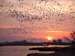the best places in the u s to see s migrating birds