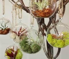 brooklyn botanic garden hanging globe terrarium