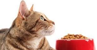 alimentazione casalinga gatto alimentazione casalinga per cani e gatti i consigli dell esperta