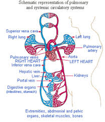 cells tissues organs and organ systems