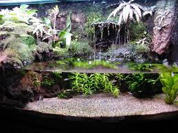 26 best images about terraris on pinterest vivarium singapore