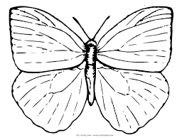 coloring pages butterfly my coloring land butterfly coloring