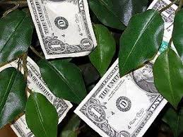 wedding money guide to wedding money trees lovetoknow
