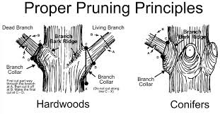top 3 reasons why tree pruning is important tree trimming overland