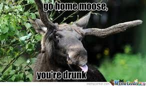 Moose Meme - go home moose by recyclebin meme center