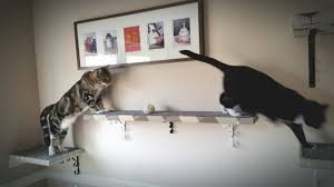 how to build cat shelves unac co