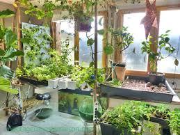 28 indoor garden vegetables 1000 ideas about indoor