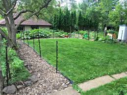 alternatives to grass in backyard lawn alternatives unconventional sustainability