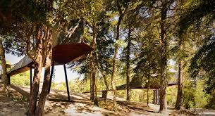 amazing tree snake houses in portugal homedezen