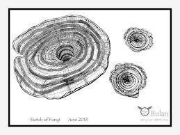 sketch of the day no 69 mushrooms u2013 the crazy bag lady
