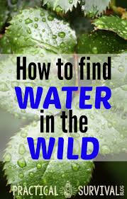 Vidga Hacks by How To Find Water In The Wild Survival Water And Survival Skills