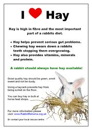 rabbit poster rabbit rehome educational rabbit care posters