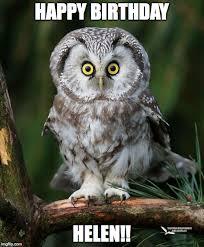 Owl Birthday Meme - owl imgflip